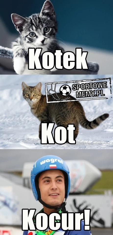 Memy o Macieju Kocie