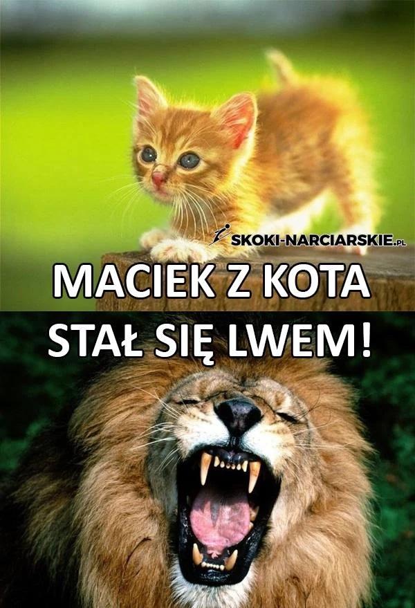 Memy o Macieju Kocie - azjatyckie zwycięstwa